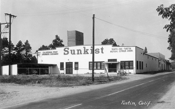 Sunkist packing house, Tustin. ( Photo courtesy Orange County Archives From the Tom Pulley Collection)