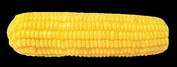 手里拿着一个嫩玉米(授权图片)