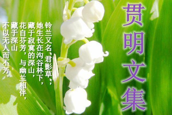贯明文集(二)中华传统文化之光 人道酬诚 至诚如神 第四十九集