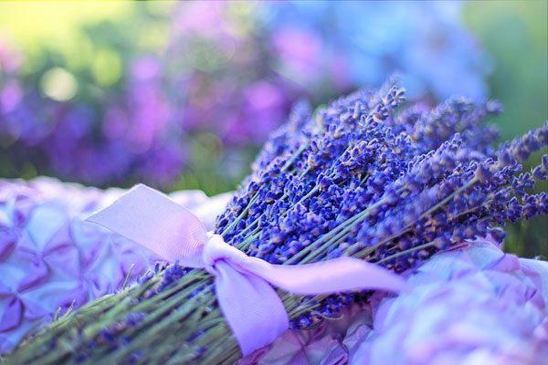 薰衣草 lavender (资料图片:pixabay)