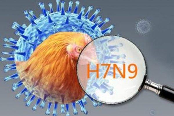 H7N9疫情凶猛 到中国大陆要注意
