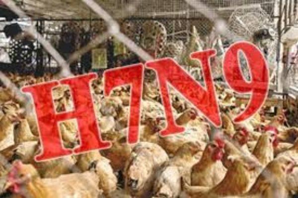 中国之窗第10集 百年最大瘟疫威胁?H7N9禽流感席卷中国