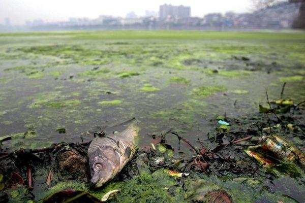 中国之窗第11集 大陆水源污染威胁健康