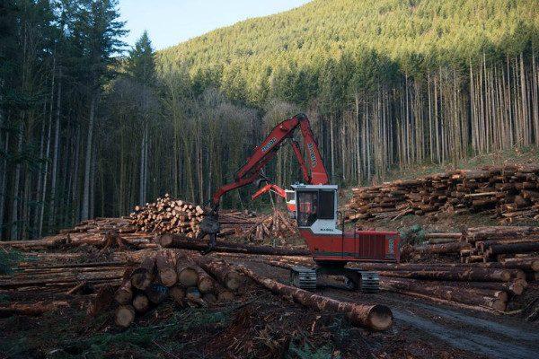 美商务部宣布:对加拿大进口软木征收最高24%反补助税