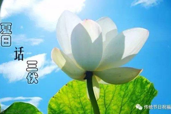 三伏(图片来源:网路)