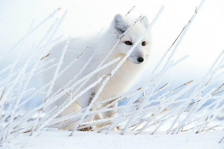 作为一名自然资源保护者,摄影师Paul Nicklen希望这些照片能唤起人们对海洋的保护意识。(图片来源:美国国家地理)
