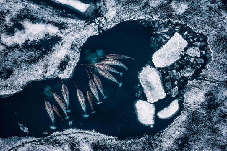 摄影师Paul Nicklen拍摄到,冰面溶化后隐藏在冰面下正在游泳的鱼。(图片来源:美国国家地理)