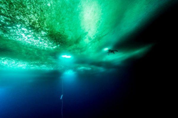 在接近五个小时的潜水过程中,潜水员记录下水下70多米深处的植物和动物生命。( 网络图片)