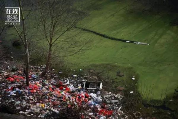 ▲图为2016年2月3日,湖北省监利县龚场镇新庄村,几只鸭子在断流的河道里觅食,河水出现绿藻主要是河水受到了污染。