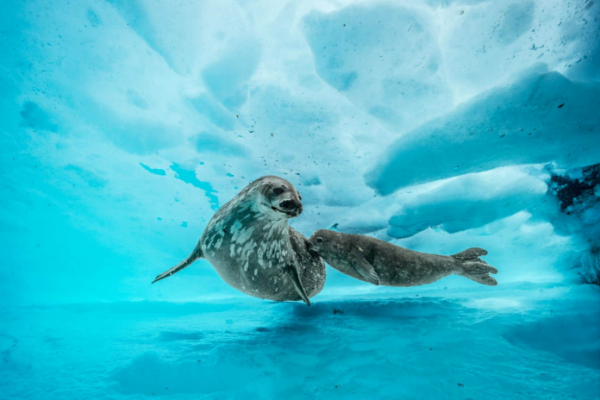 南极洲最深潜水摄影,与毫无生机的沙漠相比,这里可是个惊人的世界......( 网络图片)