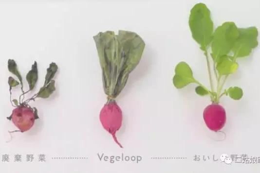 蔬菜的再生 (图片来源:vegeloop)
