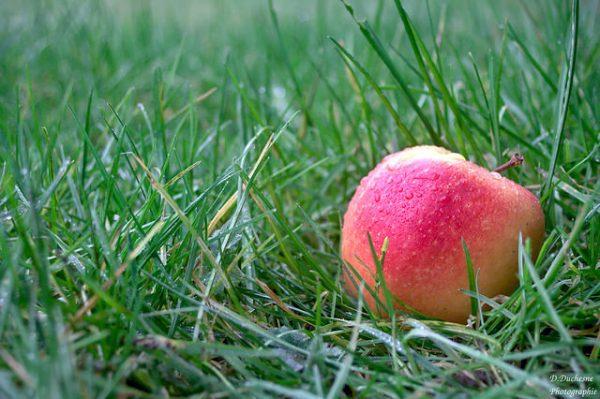 果糖广泛存在于水果和食物中(图片来源:Flickr。作者:darvoiteau。开放版权)