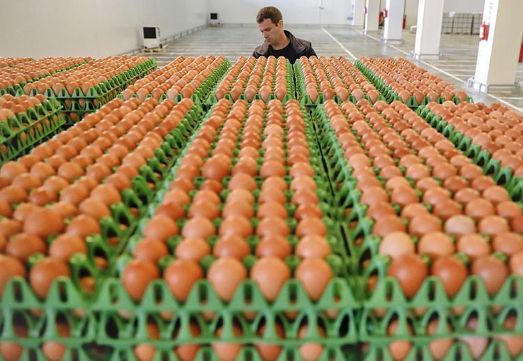 一名男子在罗马尼亚Gaesti的加工厂运送鸡蛋。(图片来源AP/ Vadim Ghirda)