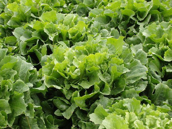 适当吃些能生吃的蔬菜 (图片来源:pixabay)