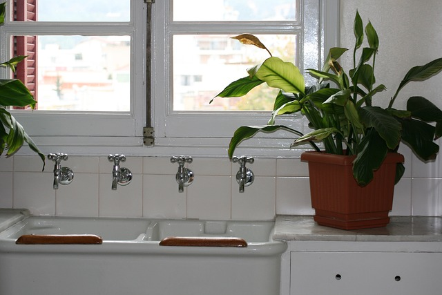 浴厕里的盆栽(图片来源:max pixel)