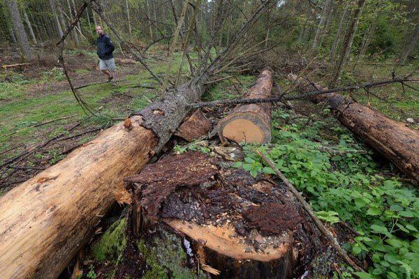 欧盟最高法院:波兰砍伐世遗原始森林违法