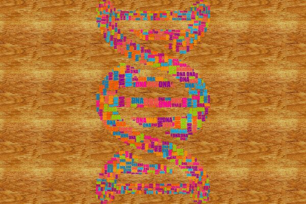DNA(圖片來源:pixabay)
