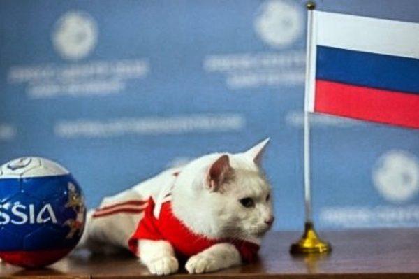 预言世界杯大赛 俄罗斯白猫成新宠