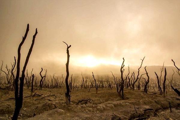 7萬年前,由於氣候惡化,人類瀕臨滅絕,數量銳減至2000人。(圖片:pixabay)