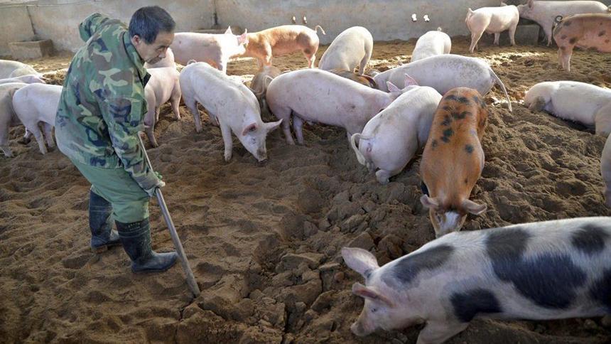 """要环保还是要猪肉?官方禁搞""""无猪县""""陷尴尬"""