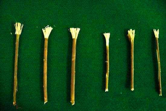 古代的杨柳枝牙刷 (图片来源: 网络图片)