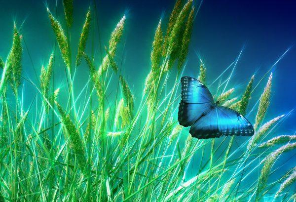 谷物(pixabay)