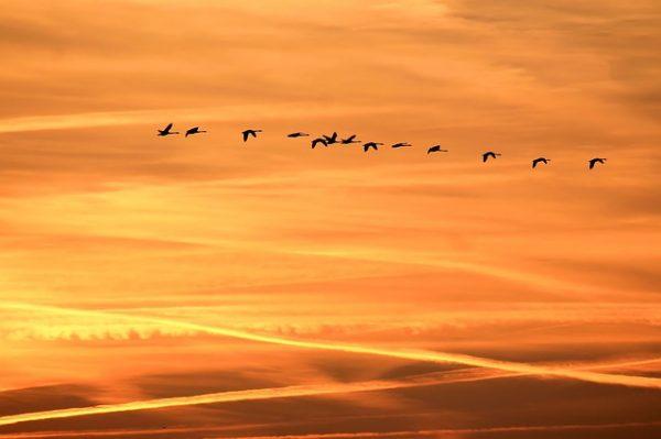 飞翔是人们千年来不变的向往(图片:pixabay)