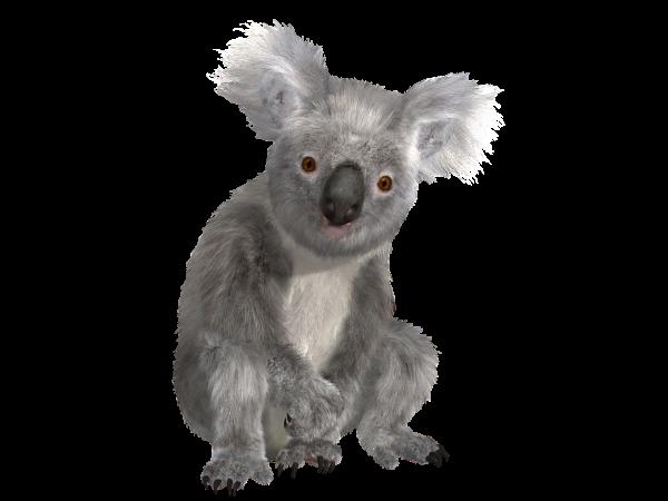 懒懒澳洲小考拉(pixabay)