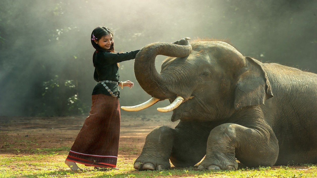 柬埔寨的女子和大象的友誼(圖片:Pixabay)https://pixabay.com/zh/photos/girl-africa-animals-asia-cambodia-1822525/
