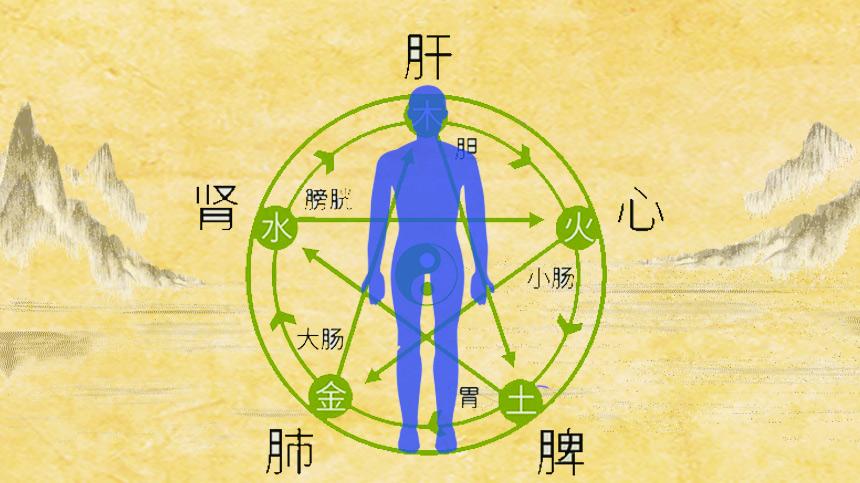 中醫學裡講究「五行,五氣,五臟,五味,五色」,他們彼此勾連,相互提攜,相生相剋。五行人體(希望之聲合成)