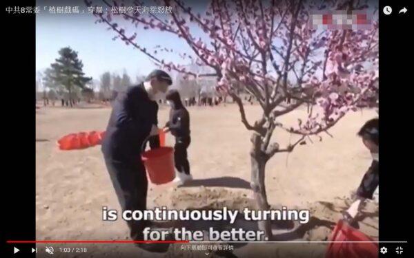 """中共常委们刚""""种""""的树木鲜花怒放。(视频截图)"""