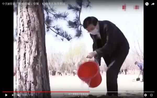 """中共常委们刚""""种""""的松树有人的腰身粗细。(视频截图)"""