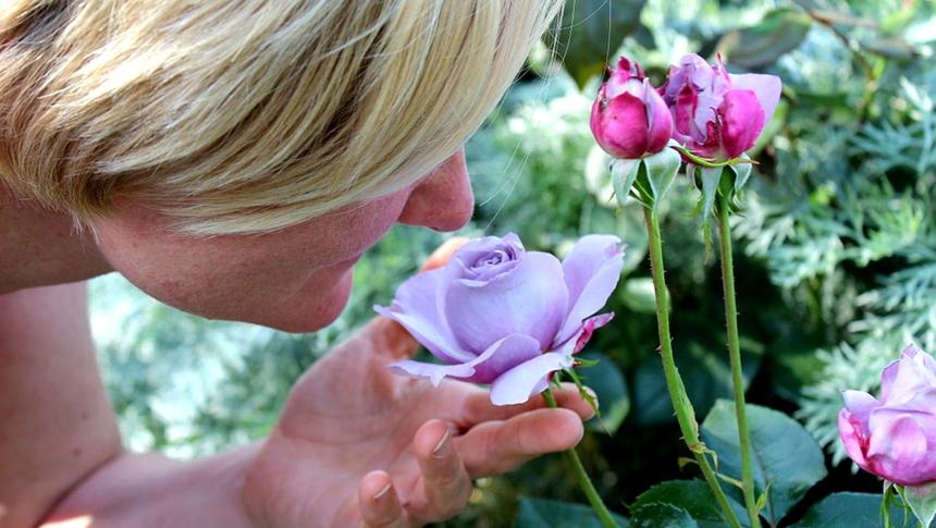 嗅觉、味觉、美女 (图片: pixabay)