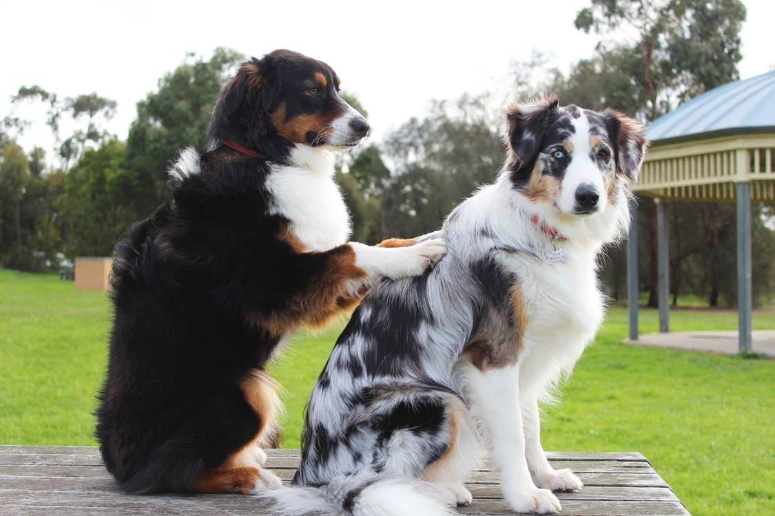 治疗犬  (图片:pexels)