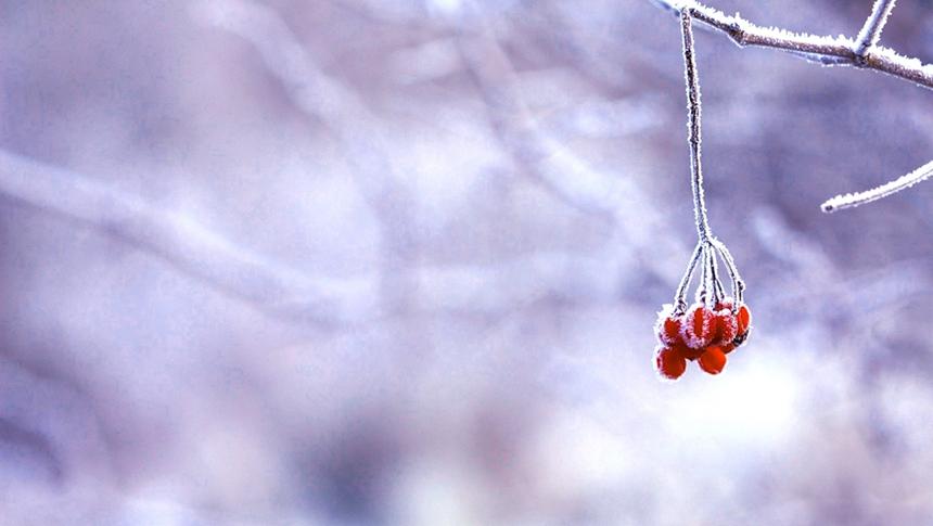 winter(pixabay)