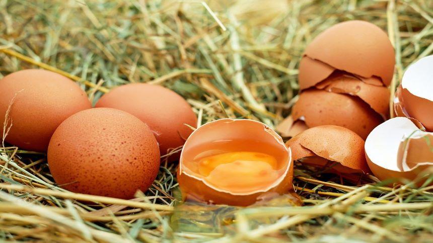 法国鸡蛋 如何挑选鸡蛋