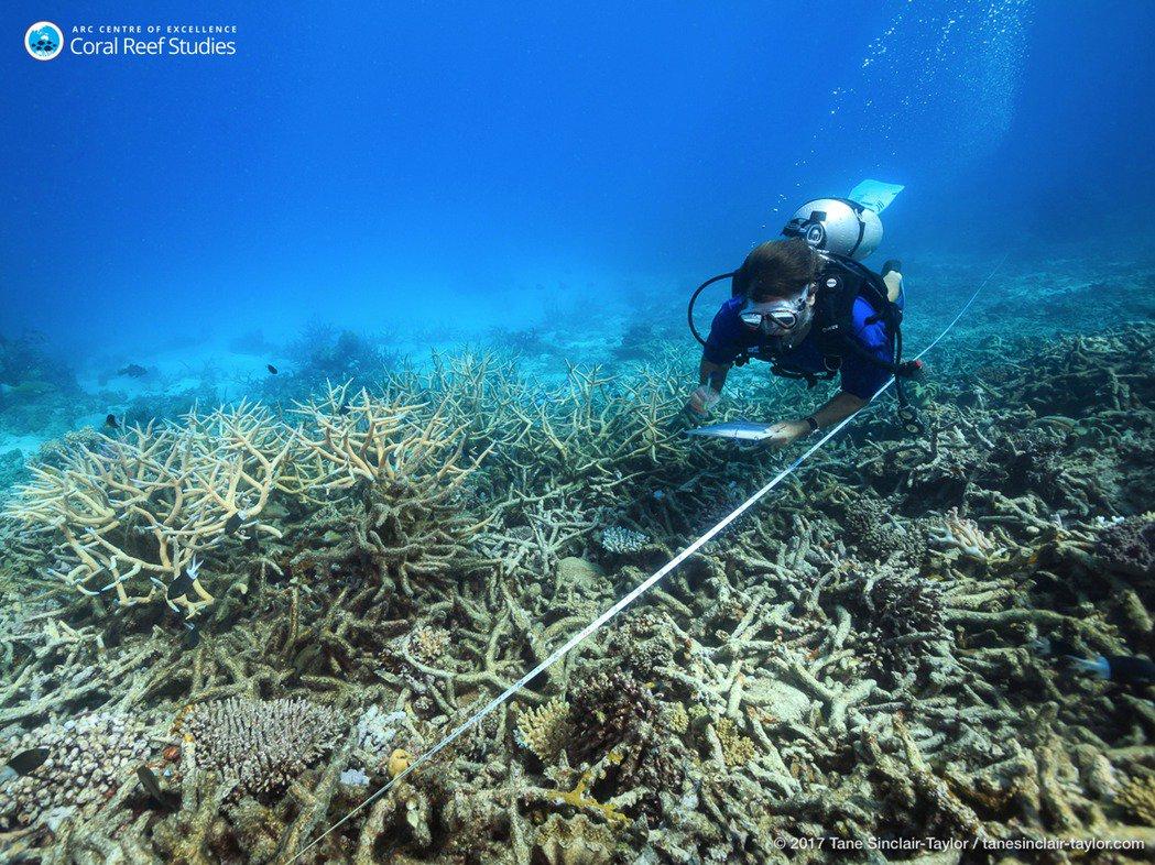 图为2016年一位科学家正在测量白化后的珊瑚礁。