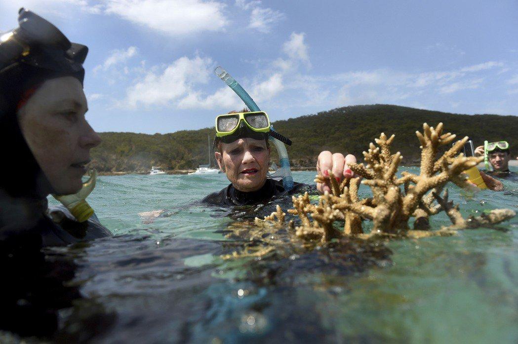 以2016、2017的大规模白化为例,其主要的成因是当年度的「严重热浪」造成海温异常,进而大量逼死了与珊瑚共生的重要藻类「虫黄藻」(Zooxanthella)。