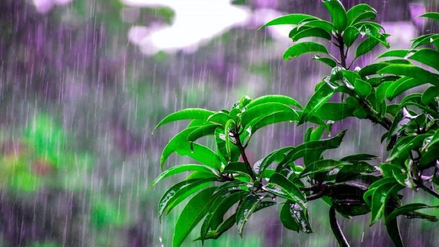 芒種時節南方進入雨季(pexels)