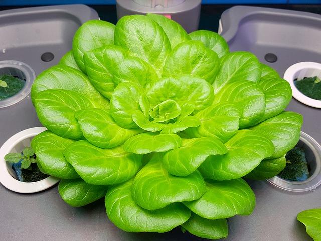 绿色蔬菜(pixabay)