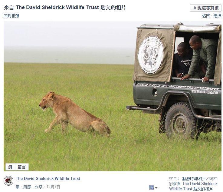 BBC动物纪录片担纲狮族遭毒杀 2狮死亡