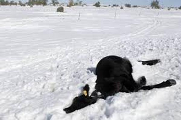 凍死 自殺